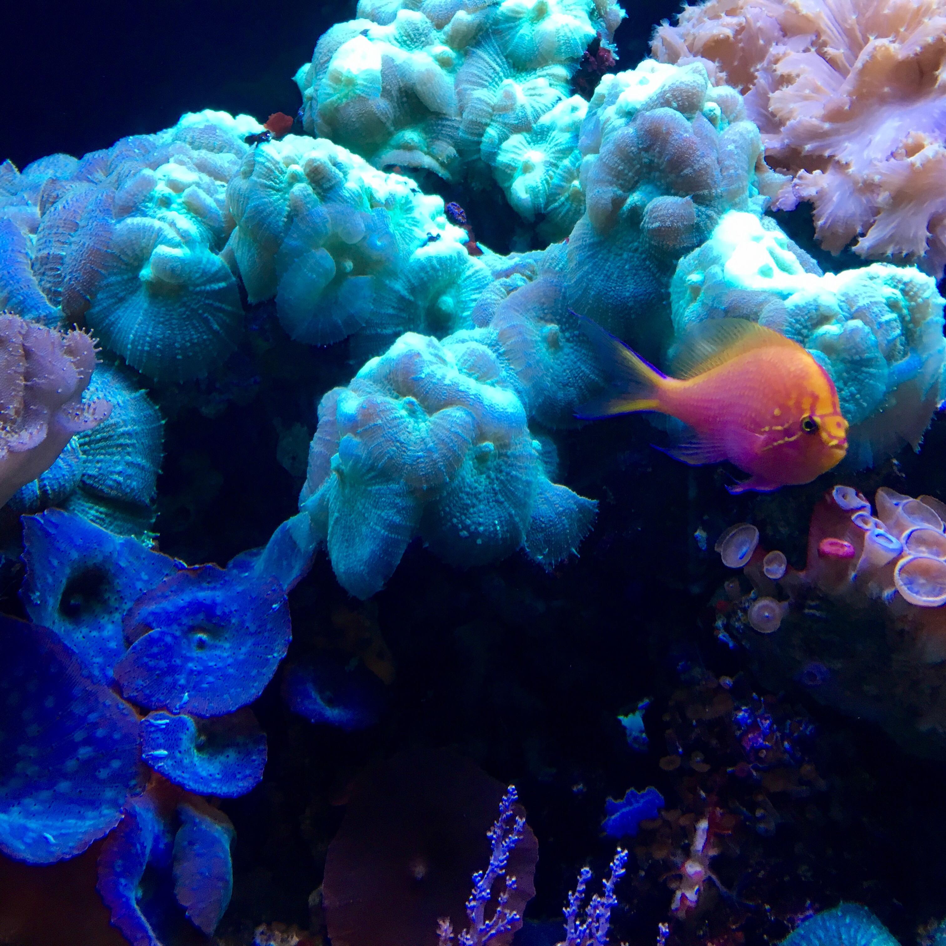 The Florida Aquarium Elyssa Writes